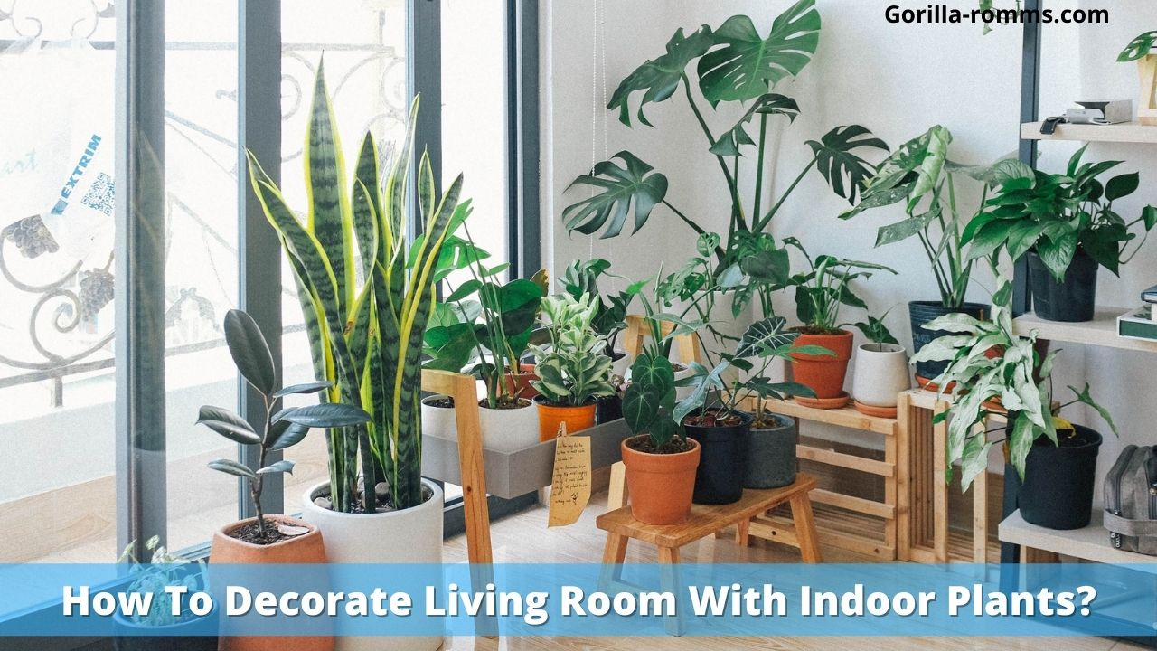 How To Decorate Living Room With Indoor Plants?
