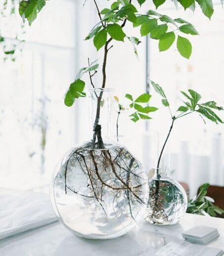 floating plants for living room