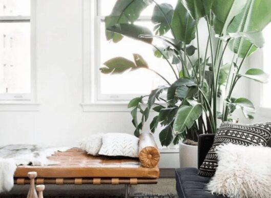 decorate indoor plants with sofa