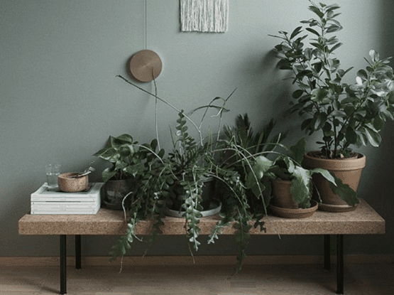 use bench for indoor plants